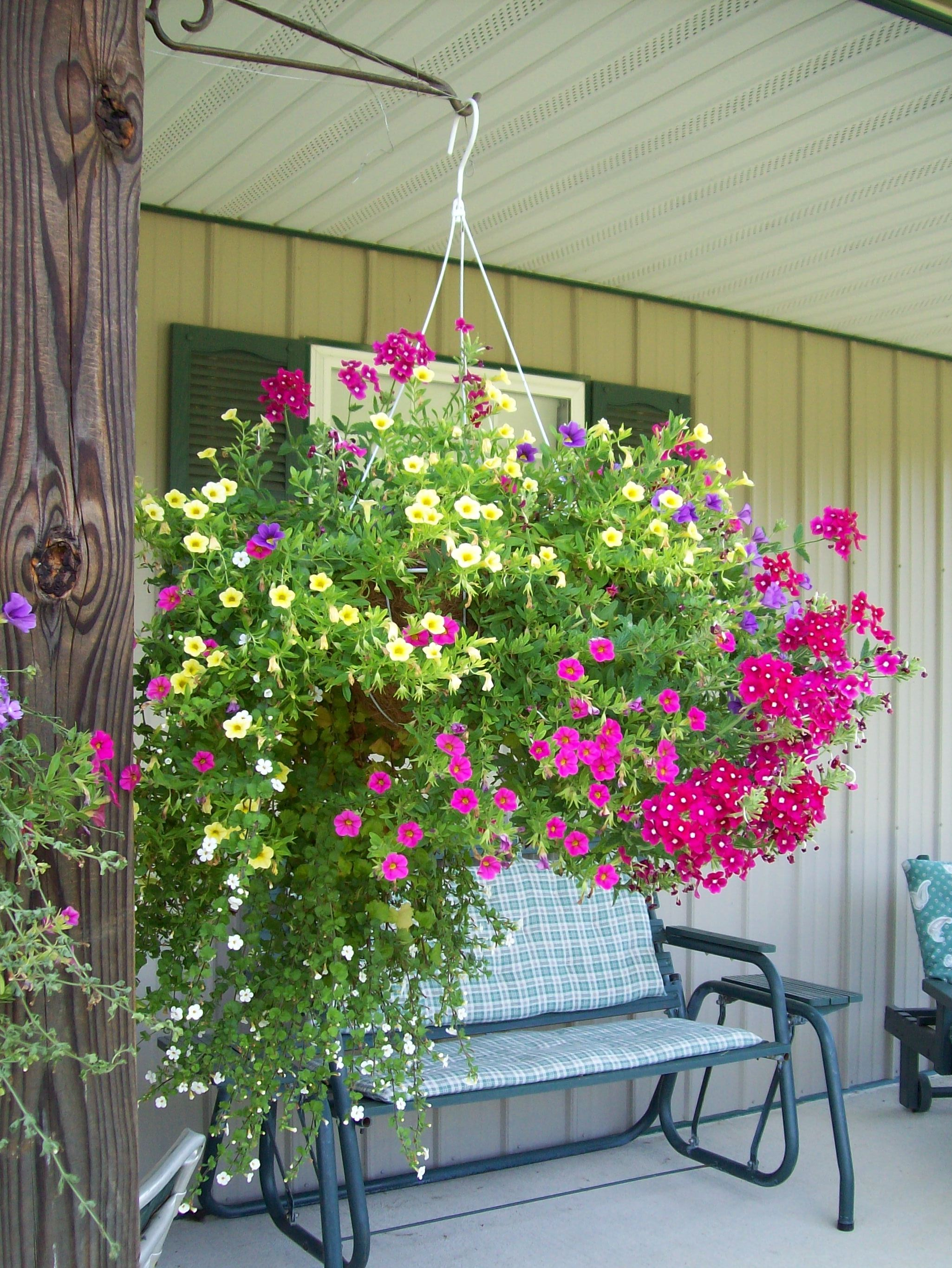Ohio clinton county midland - Mixed Annual Hanging Basket