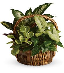 Emerald Garden Basket from Swindler and Sons Florists in Wilmington, OH