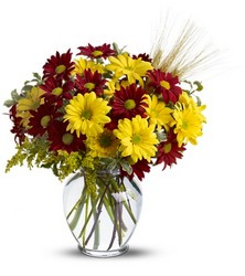 Fall for Daisies from Swindler and Sons Florists in Wilmington, OH
